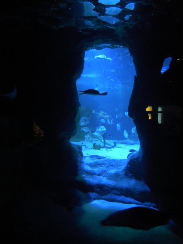 aquarium7