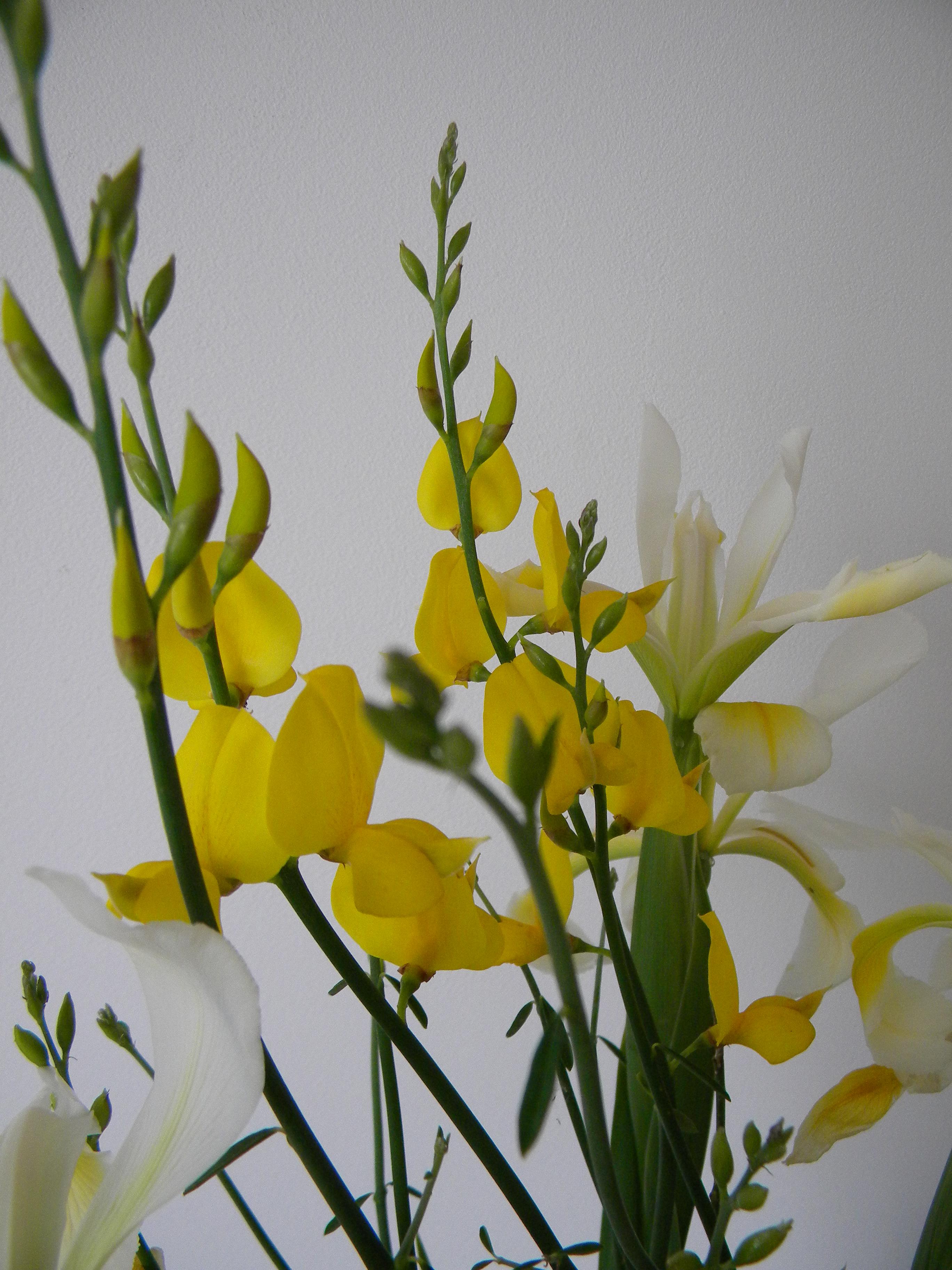 Les fleurs du jardin maman est en haut for Jardin 8686